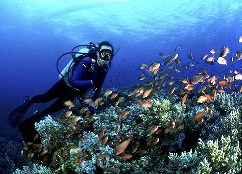 Wtr_diving